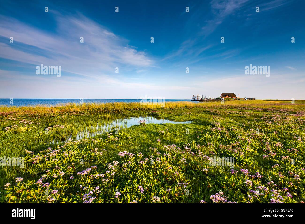 Dwelling mound, Hallig Langeness, North Frisian Islands, Schleswig-Holstein, Germany - Stock Image