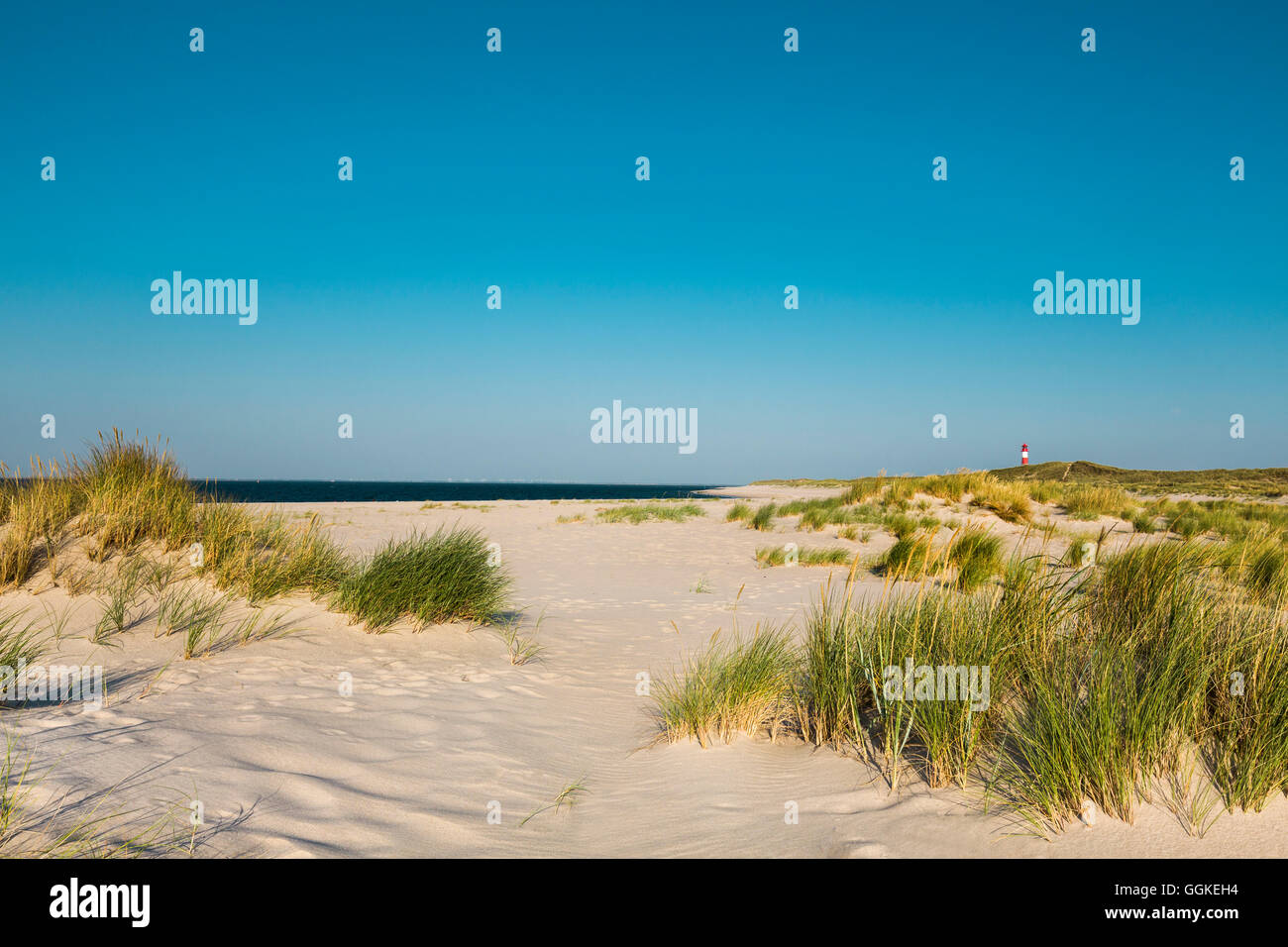 Beach and List east lighthouse, Ellenbogen, Sylt Island, North Frisian Islands, Schleswig-Holstein, Germany - Stock Image