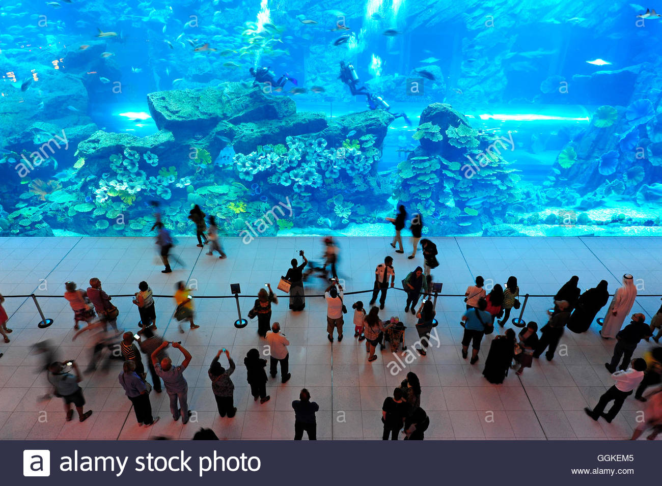 Dubai Aquarium in Dubai Mall, the shopping centre in Downtown, Dubai, United Arab Emirates - Stock Image