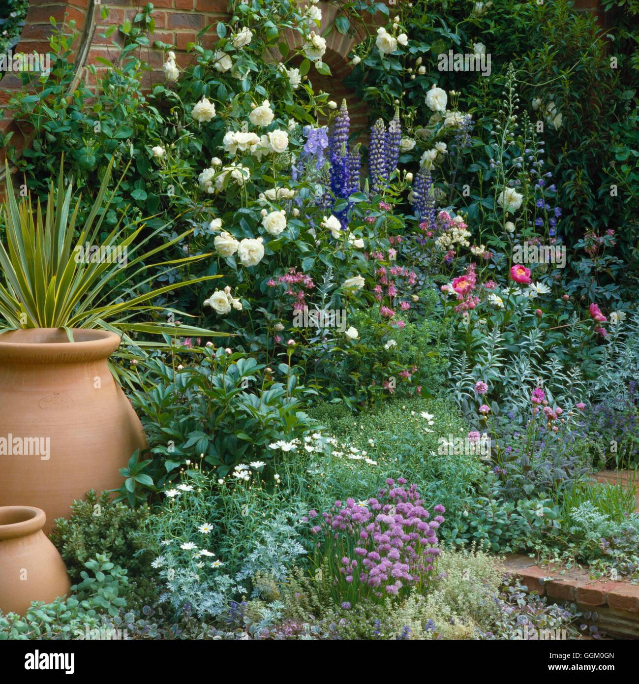 Mixed Border - with Roses and Perennials- - (Please Credit: Photos Hort/ Designer Andrea Parsons)   MXB057251  Compuls - Stock Image
