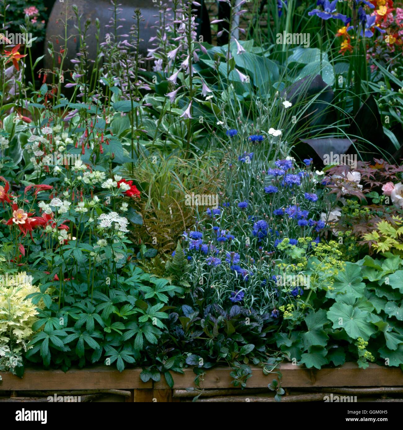 Mixed border with annuals perennials shrubs roses and bulbs stock mixed border with annuals perennials shrubs roses and bulbs please credit photos horticultural berkshire college of agri izmirmasajfo