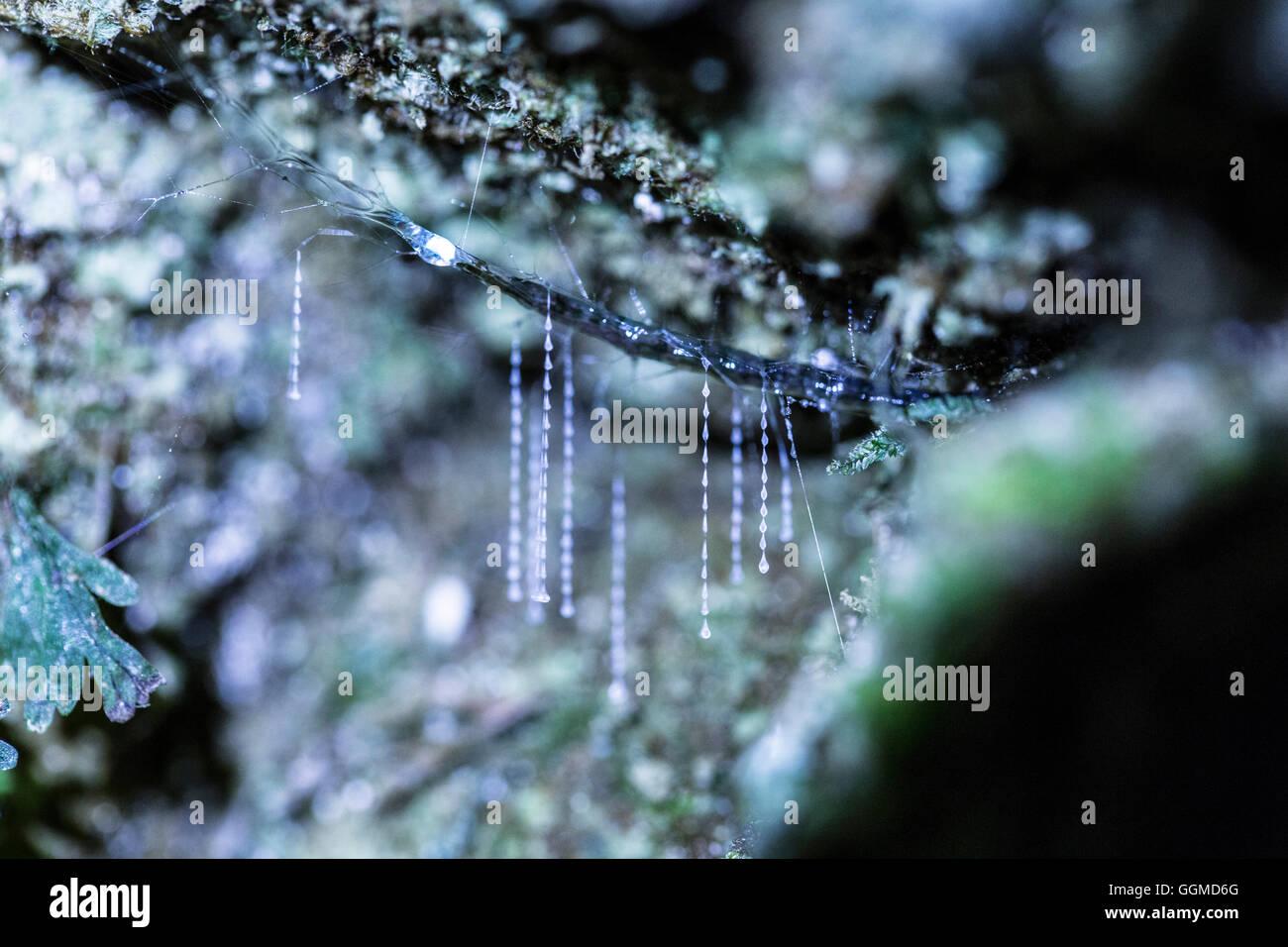 Glow Worm Stock Photos & Glow Worm Stock Images - Alamy