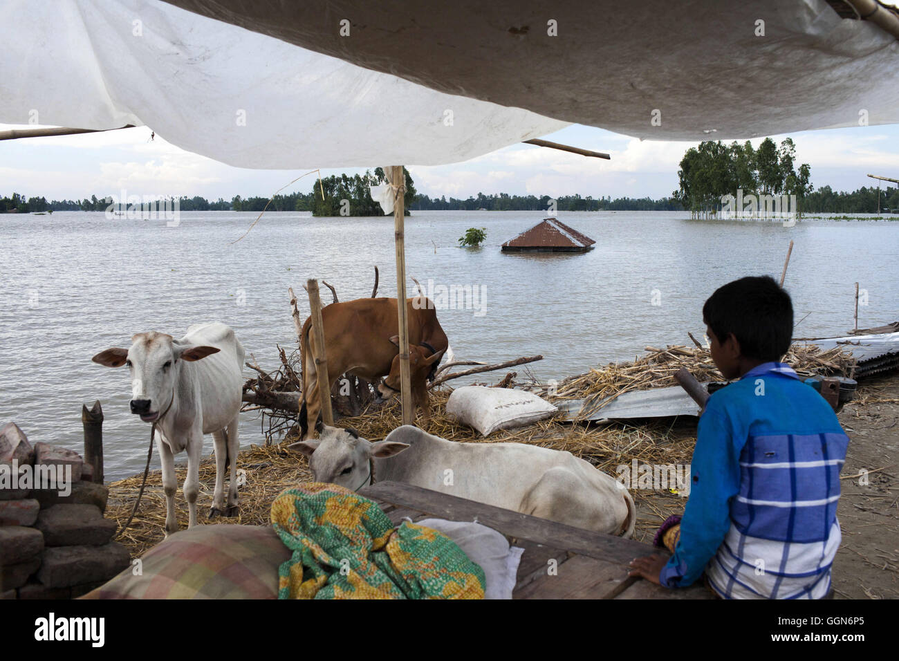 Dhaka, Dhaka, Bangladesh. 1st Aug, 2016. August 01, 2016 - Gaibandha, Bangladesh - After washed out and lost her - Stock Image