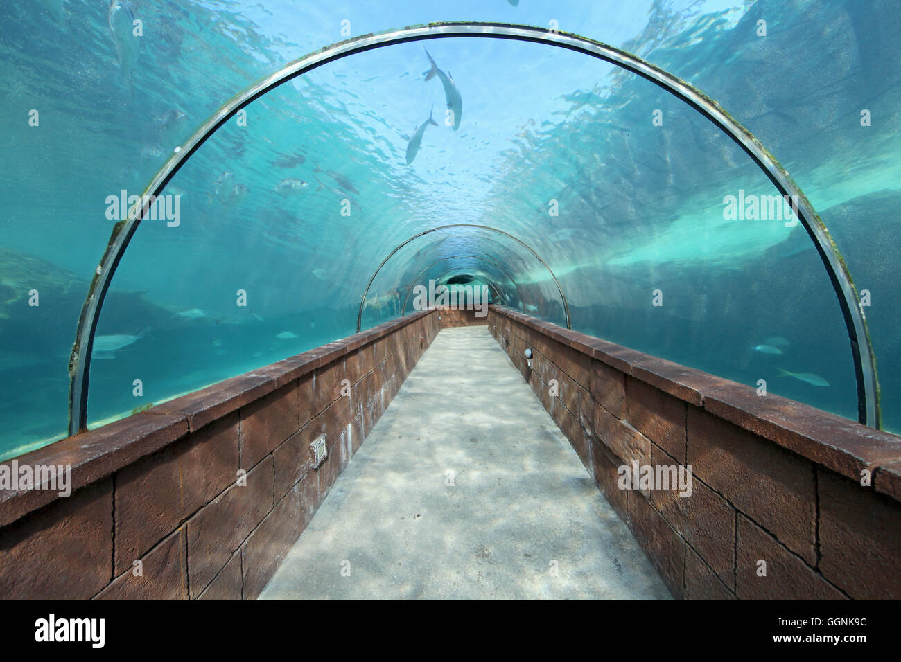 Looking through an aquarium tunnel with fish - Stock Image