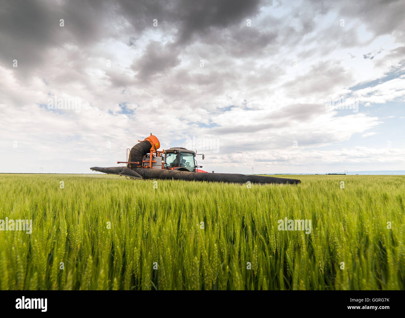 Tractor spraying wheat field with sprayer - Stock Image
