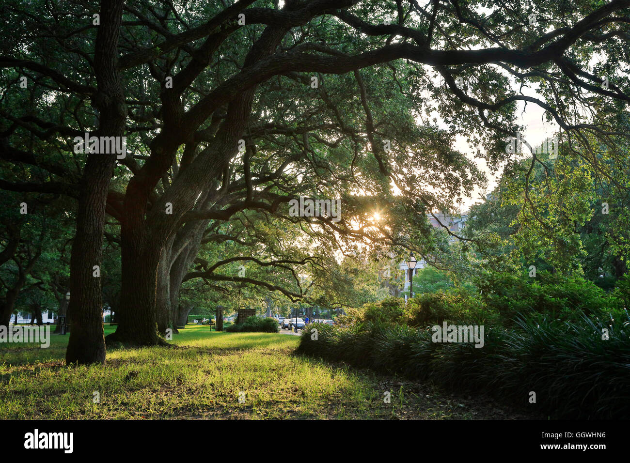 Ancient trees in a park - CHARLESTON, SOUTH CAROLINA - Stock Image