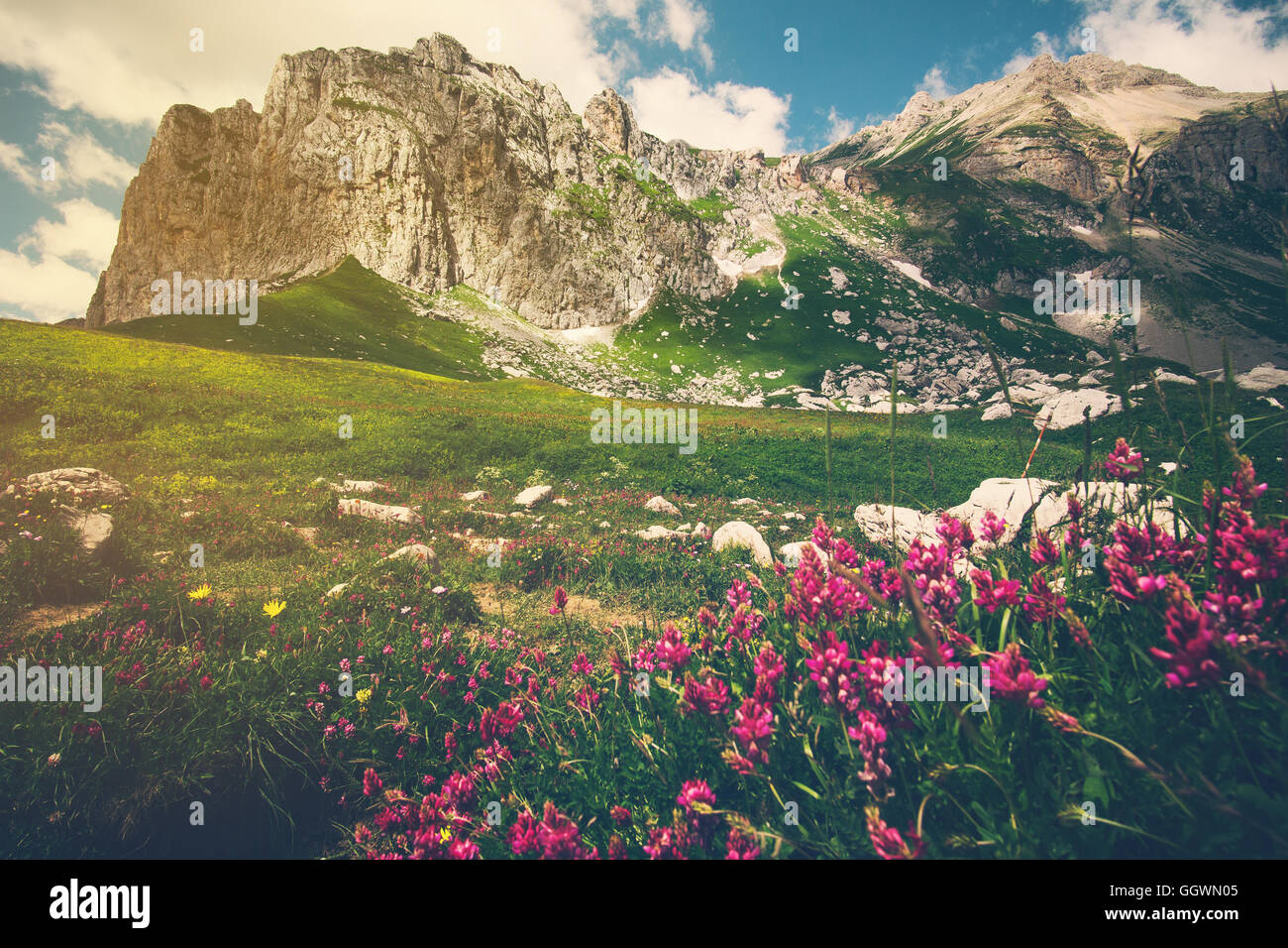 Rocky Mountains and green alpine valley with pink flowers Landscape Summer Travel scenic view - Stock Image