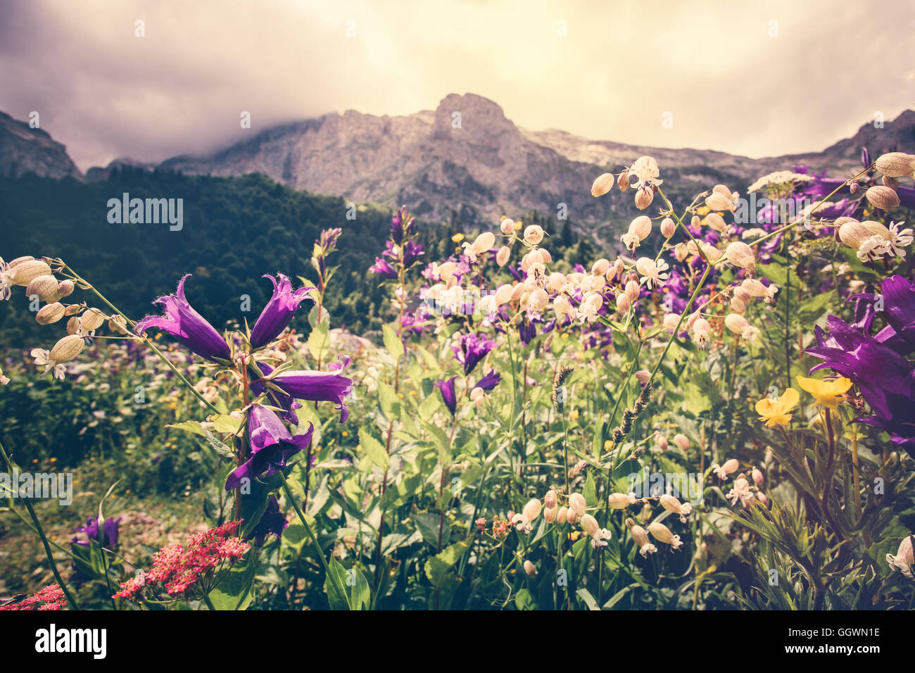 Blooming flowers valley with rocky Fisht Mountains Landscape Summer Travel scenic view  moody cloudy sky - Stock Image