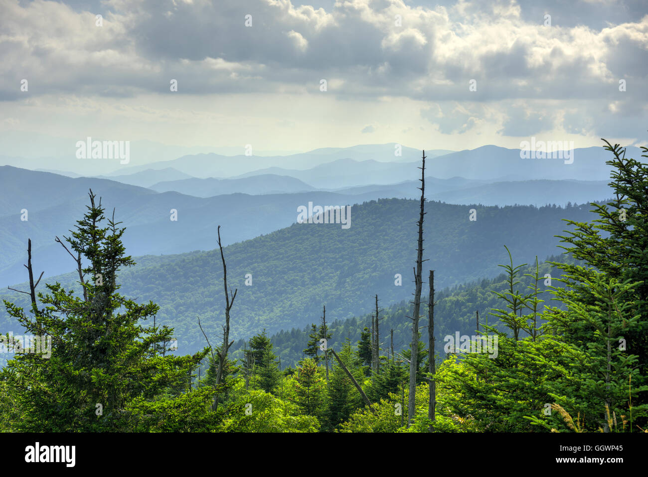Summer mountain ridges in North Carolina above the Newfound Gap area, just below Clingman's Dome. Photo by Darrell - Stock Image