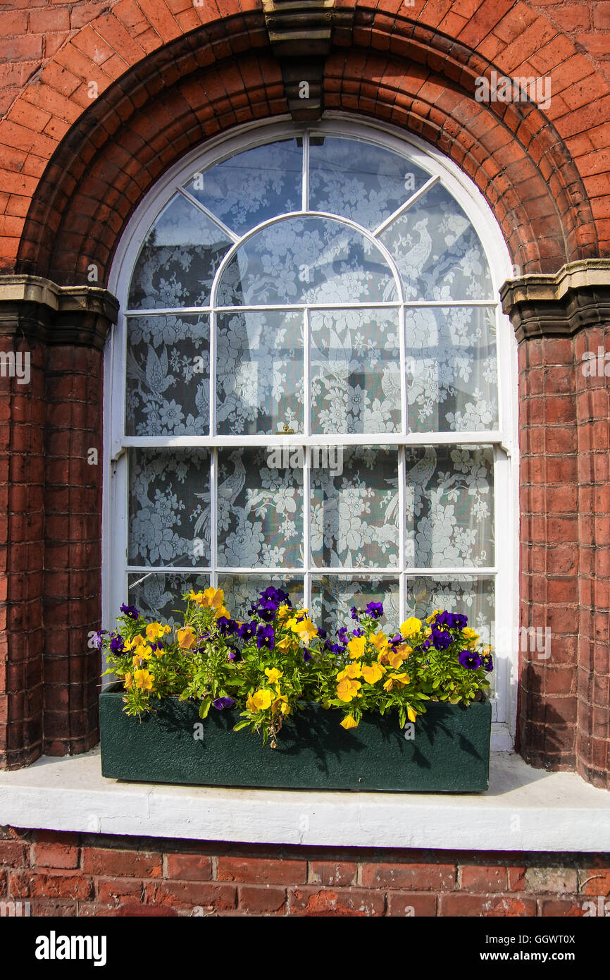 Nasturtiums bloom in window box - Berkhamsted, UK - Stock Image