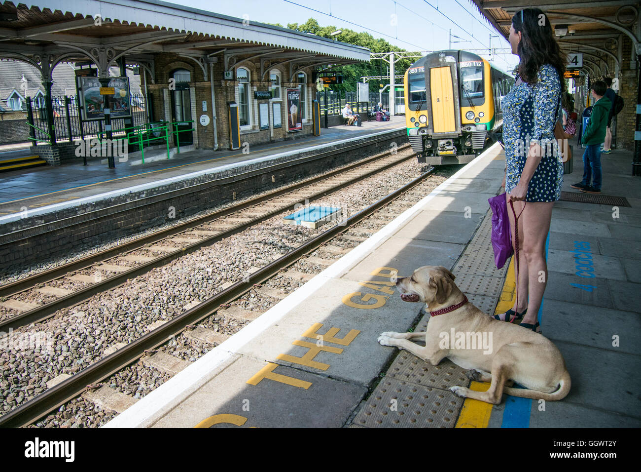 Woman with dog waiting at Berkhamsted Railway Station for train to London - Stock Image