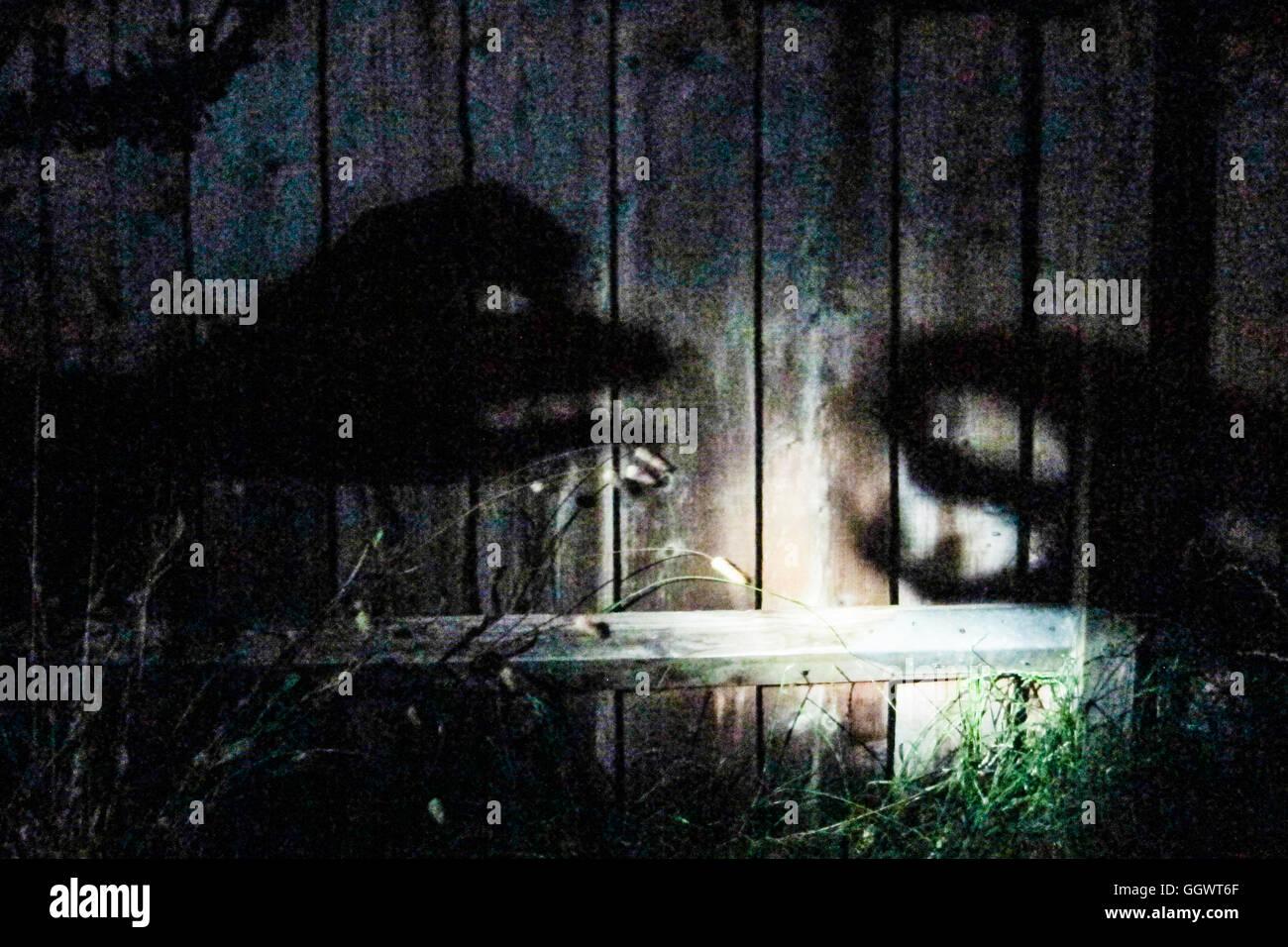Hand shadows make shadow monsters on garden fence - Berkhamsted, UK - Stock Image
