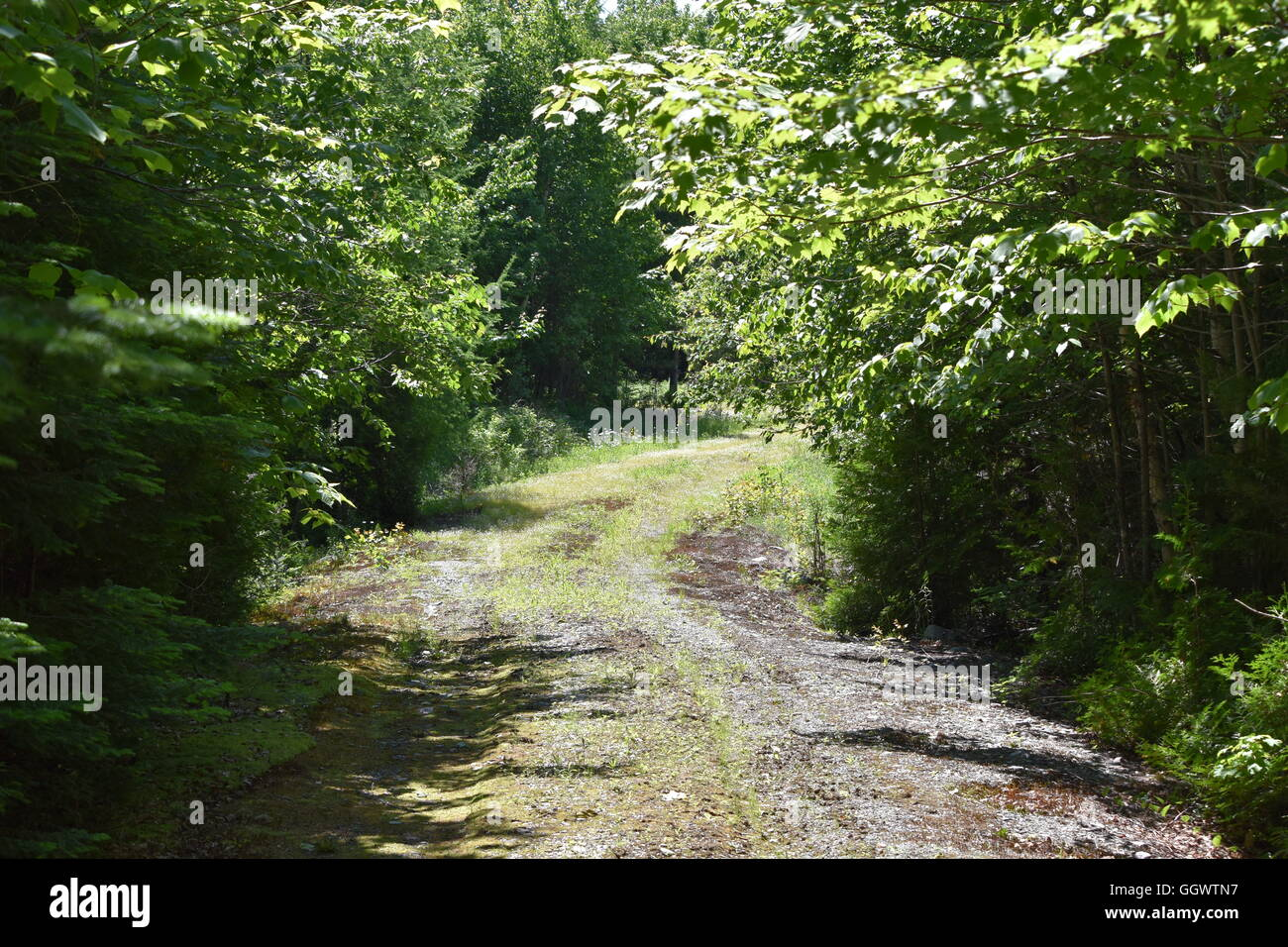 Winding unpaved road grassing over in northern Maine - Stock Image