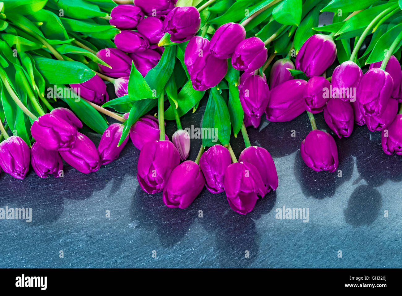 Anniversary colorful tulip flower bouquet on grey background for birthday, mothers day or valentines day gift, flat Stock Photo