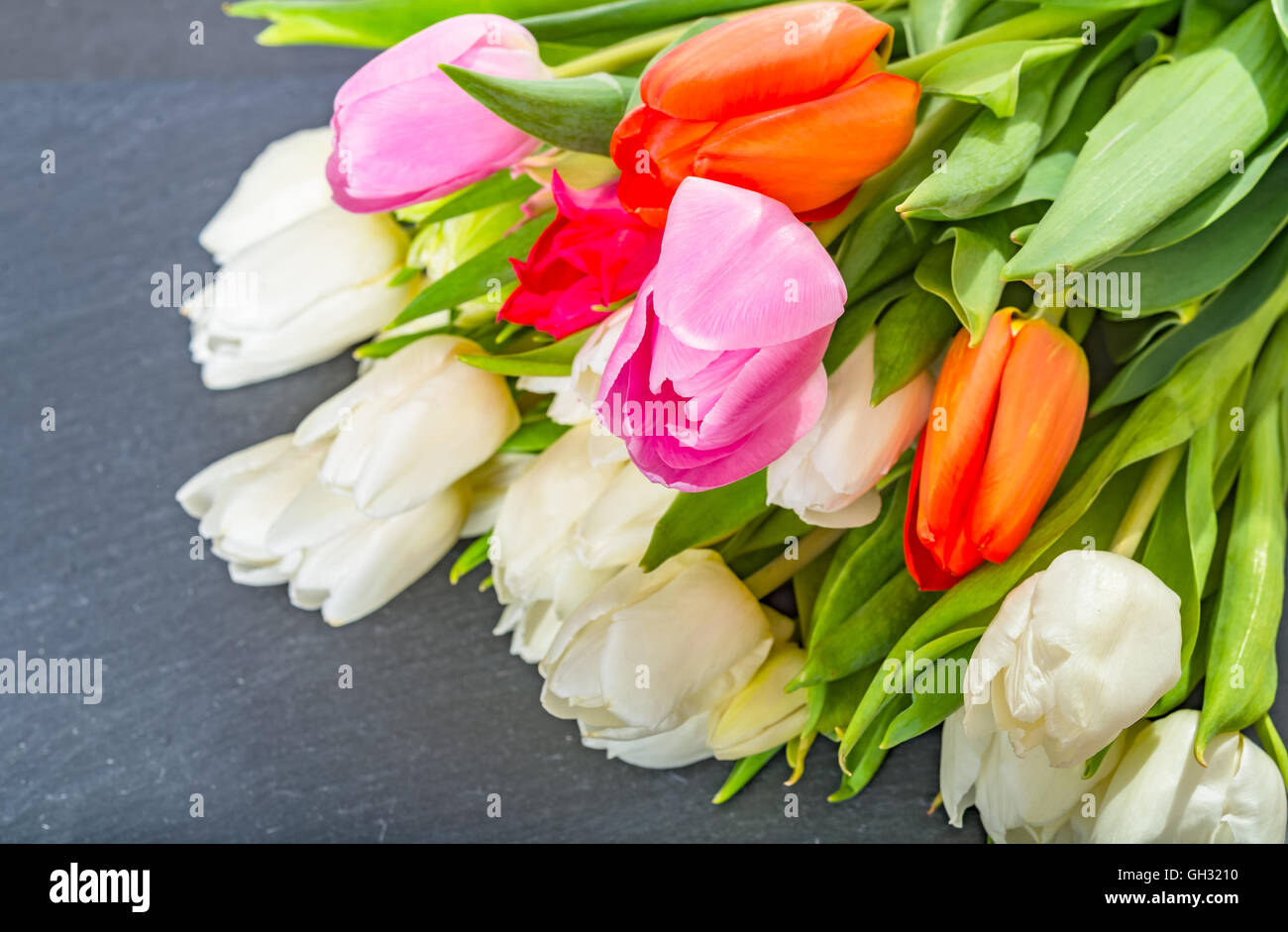 Anniversary colorful tulip flower bouquet on grey background for anniversary colorful tulip flower bouquet on grey background for birthday mothers day or valentines day gift flat lay view izmirmasajfo Image collections