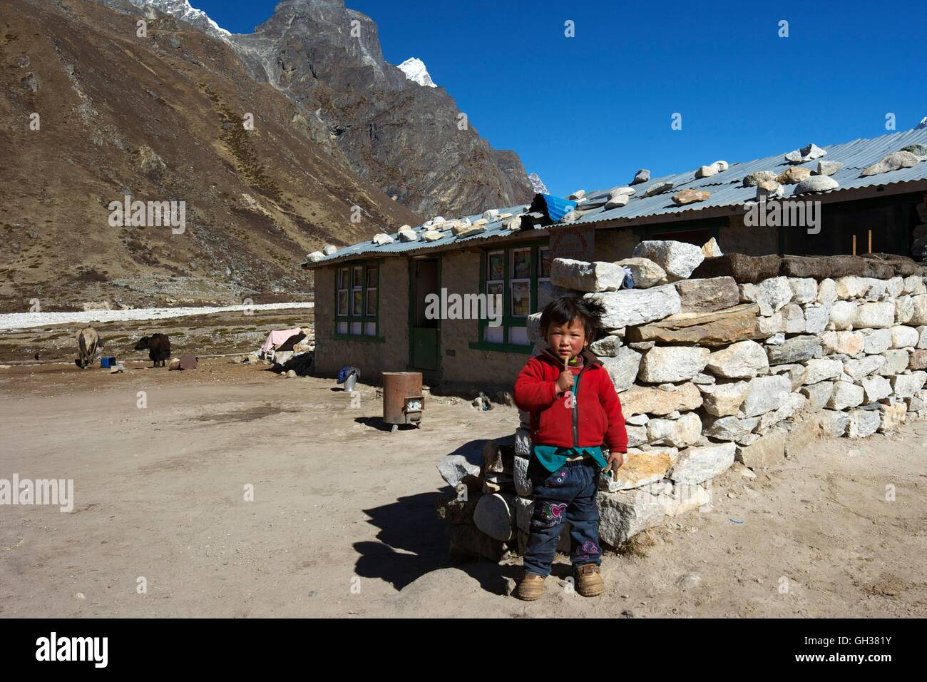 Young Nepali boy in Pheriche, Sagarmatha National Park, Solukhumbu District, Nepal, Asia - Stock Image