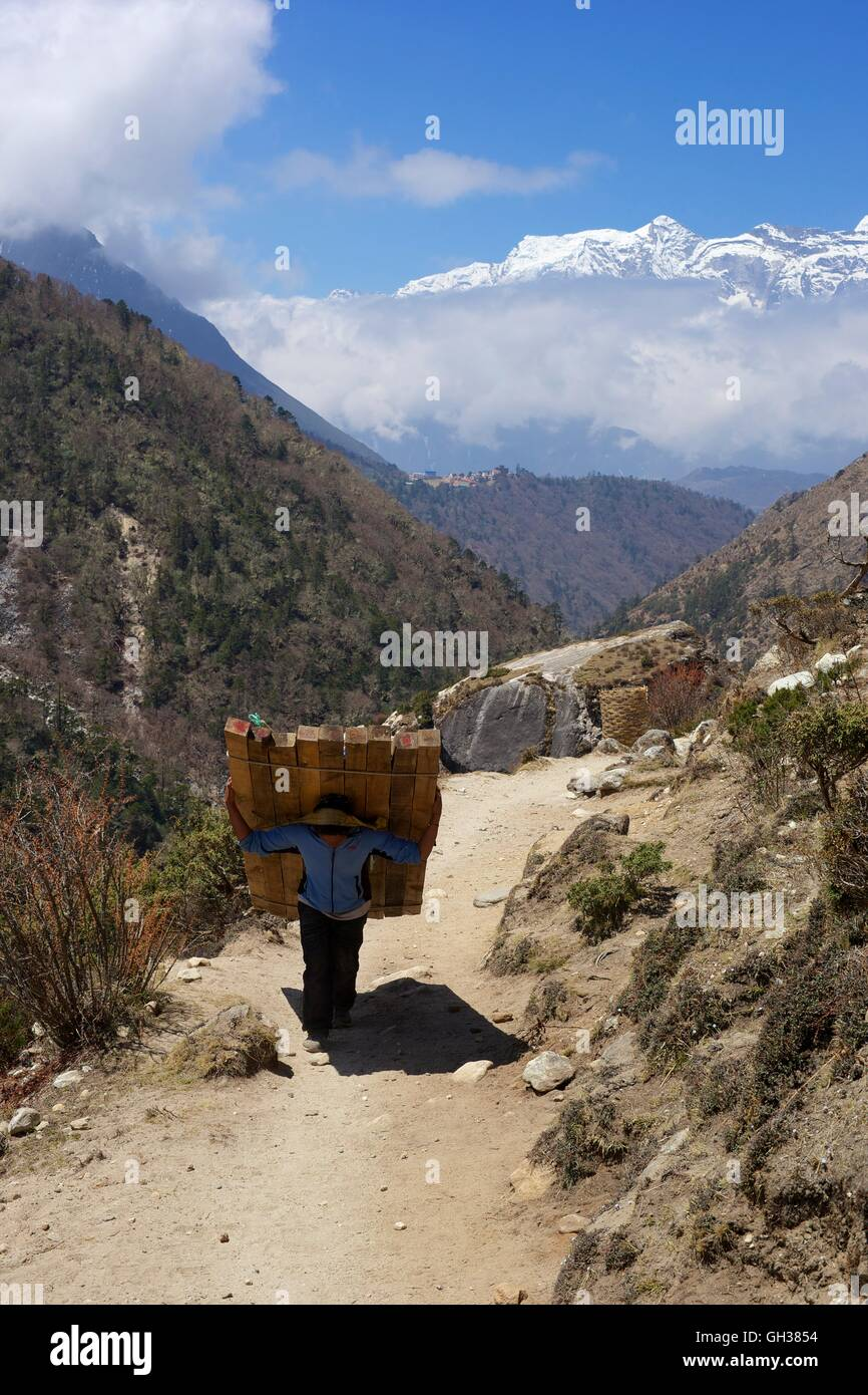 Nepali porter carrying load of wood near Tengboche, Sagarmatha National Park, Solukhumbu District, Nepal, Asia - Stock Image