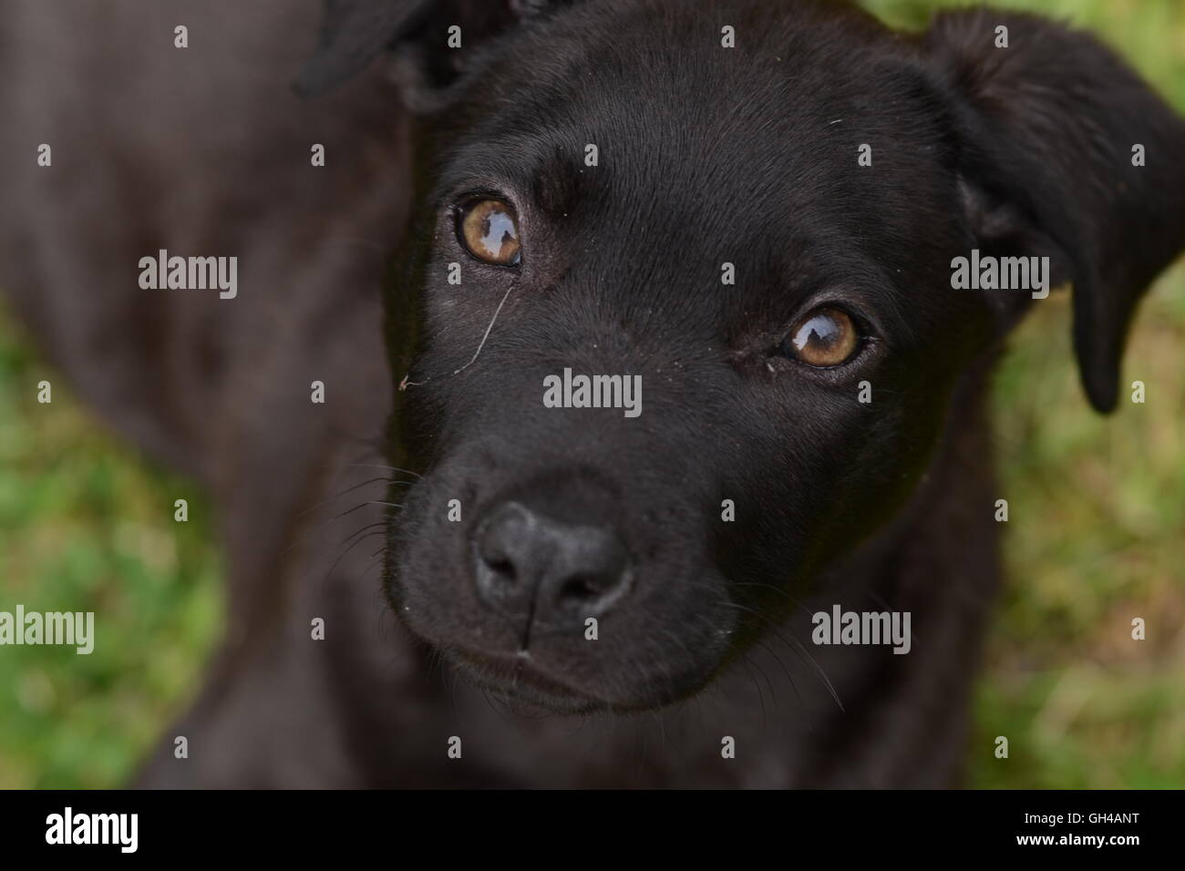 Dreaming puppy - Stock Image
