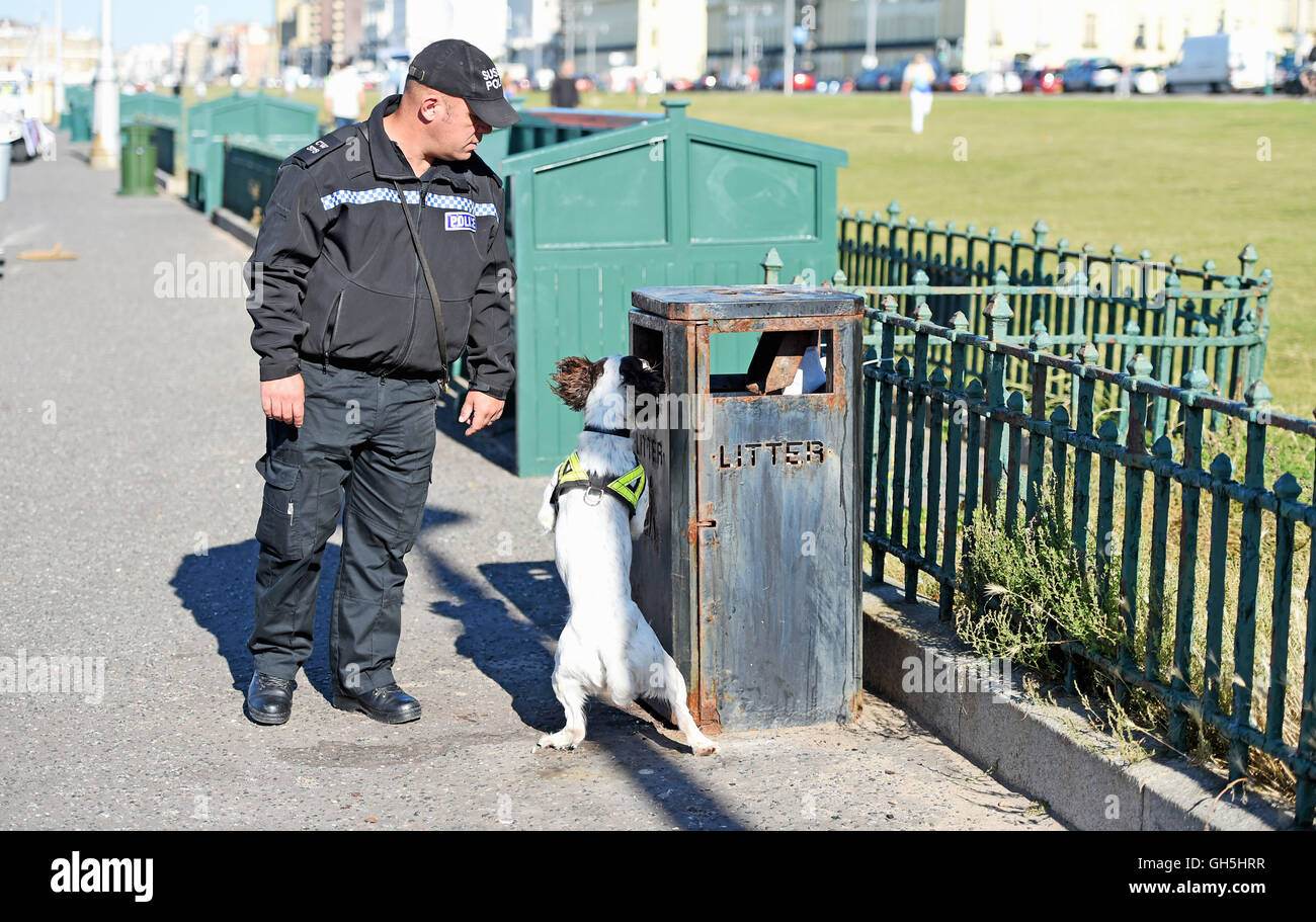 Police sniffer dog in action with handler - Stock Image