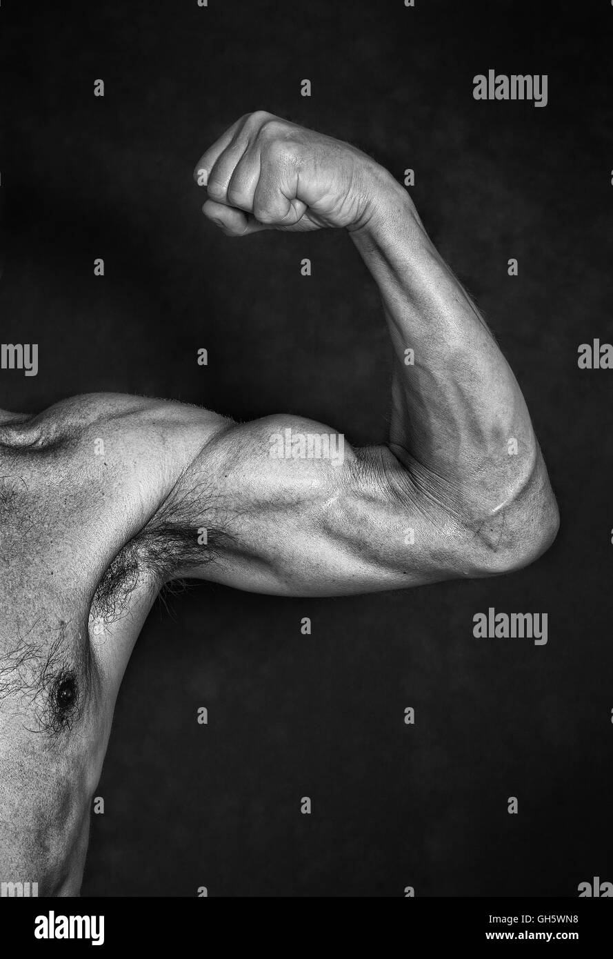 Muscle - Stock Image