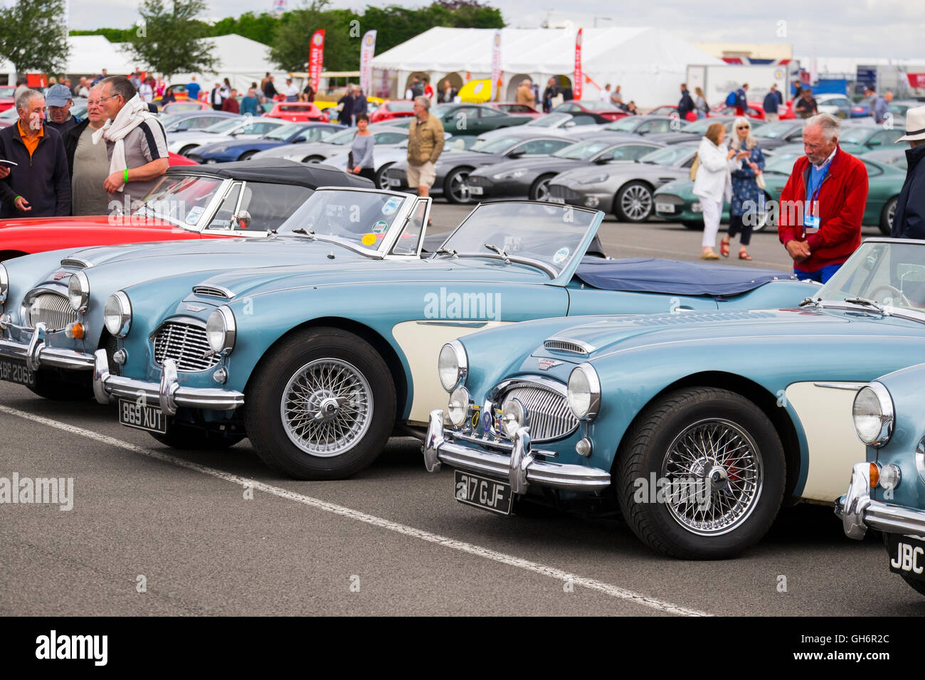 Austin Healey sports cars on display at the 2016 Silverstone Classic event, England, UK - Stock Image