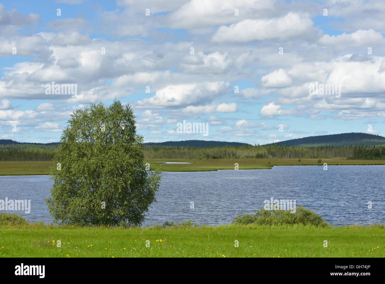 Summer landscape. Coastline of north lake - Stock Image