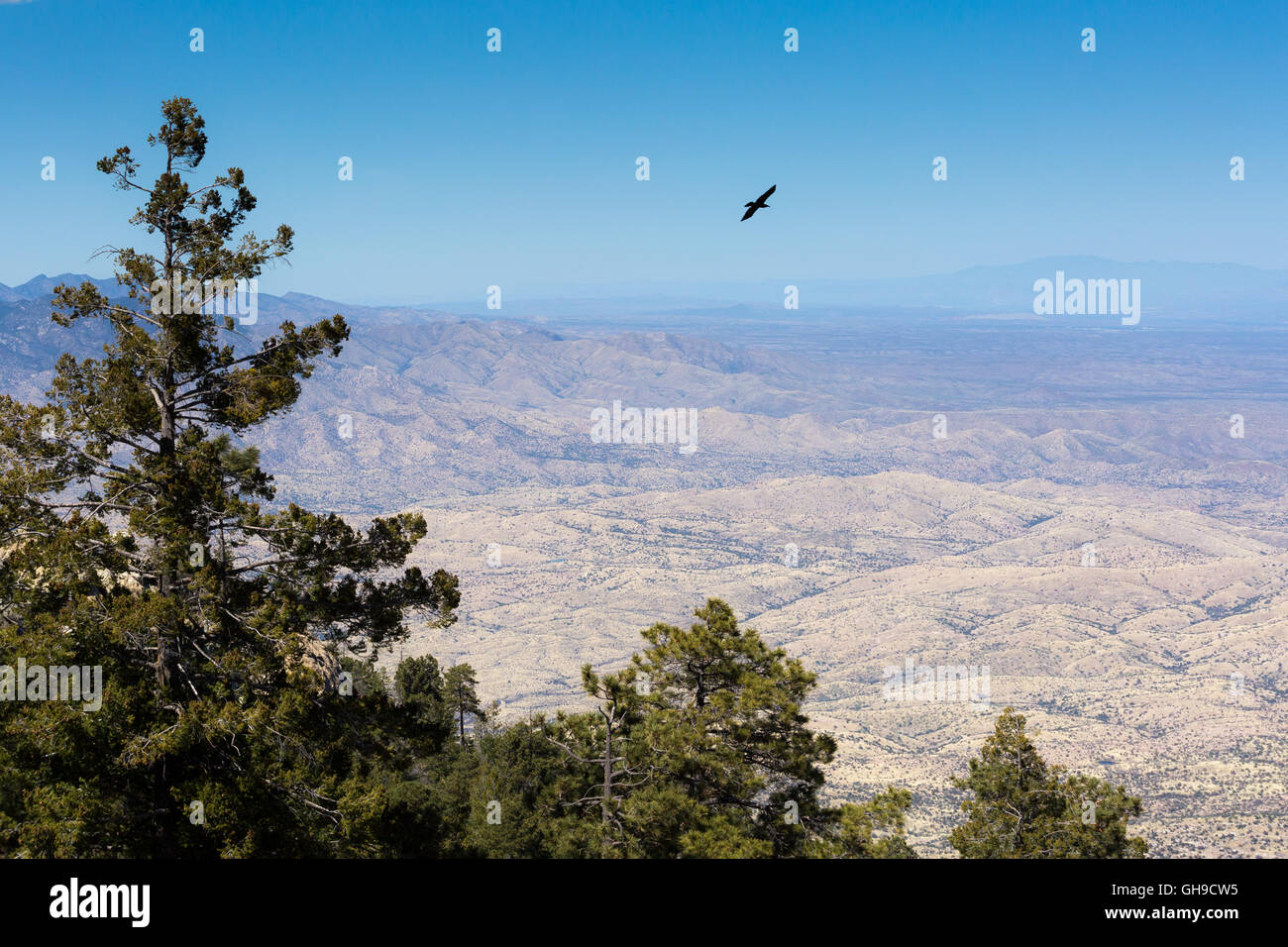 A raven flying high above the Sonoran Desert floor away from Mica Mountain. Saguaro National Park, Arizona - Stock Image