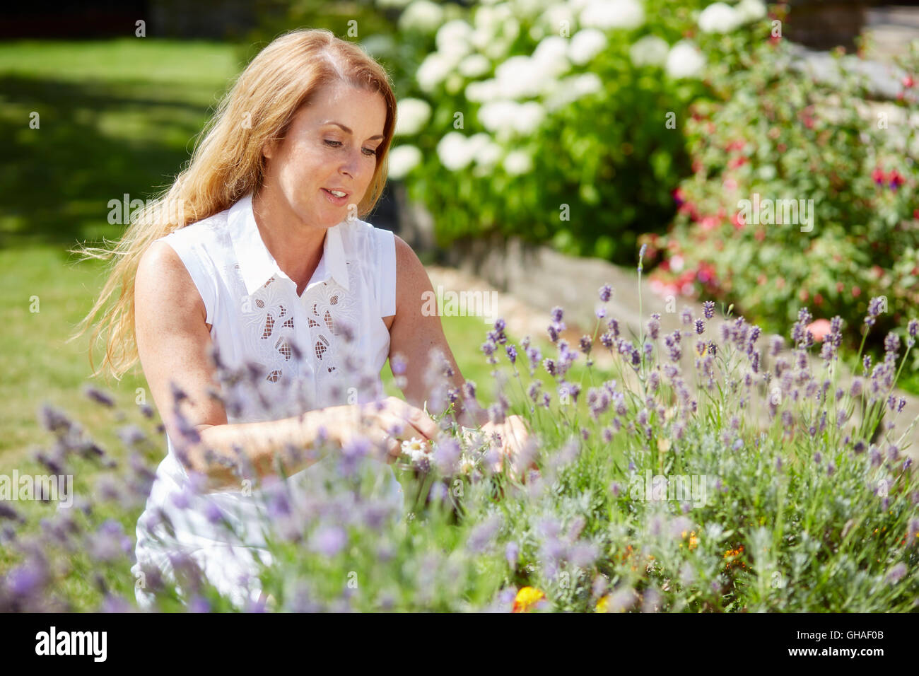 Woman trimming flowers outdoors - Stock Image