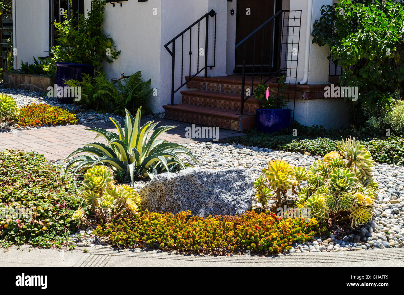 Colorful Water Friendly Drought Tolerant Plants In California   Stock Image