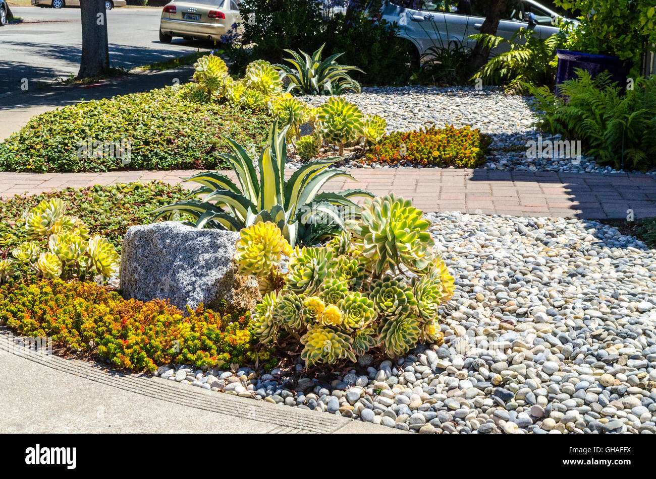 Beau Colorful Water Friendly Drought Tolerant Plants In ...