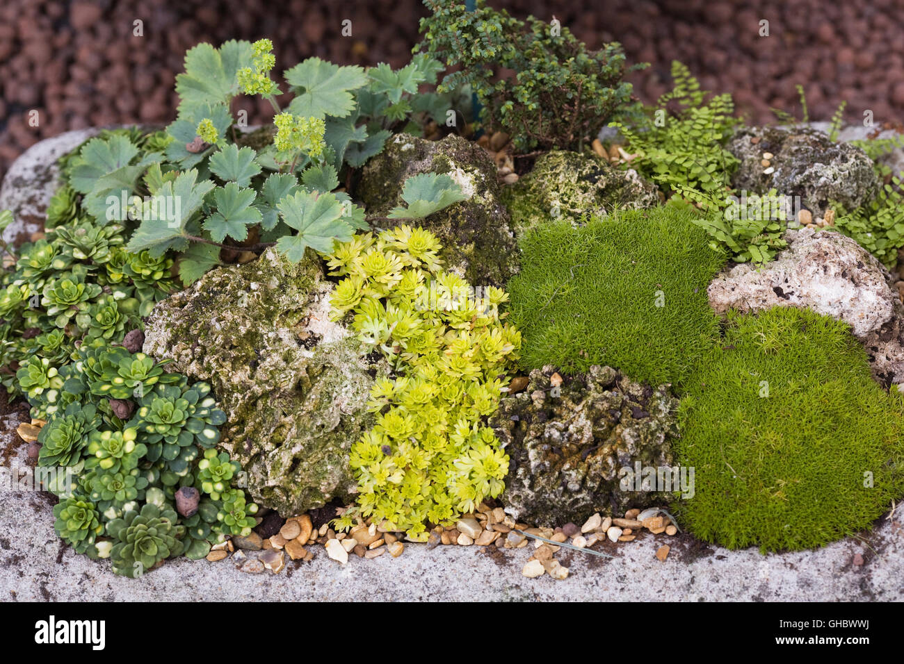 Trough planted with alpine plants. - Stock Image