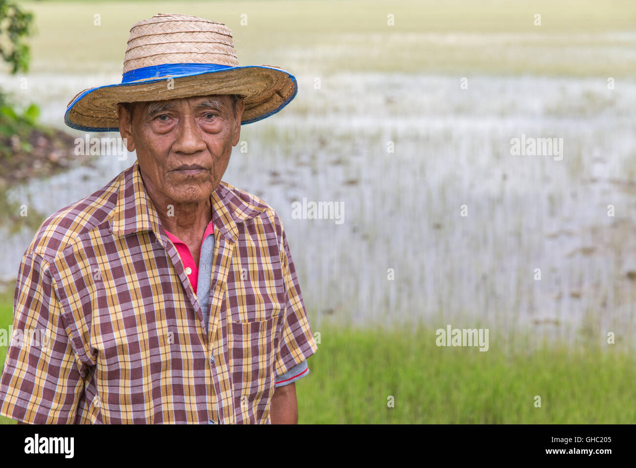 Elderly Thai rice farmer wearing a hat and looking down with a rice paddy in the background - Stock Image