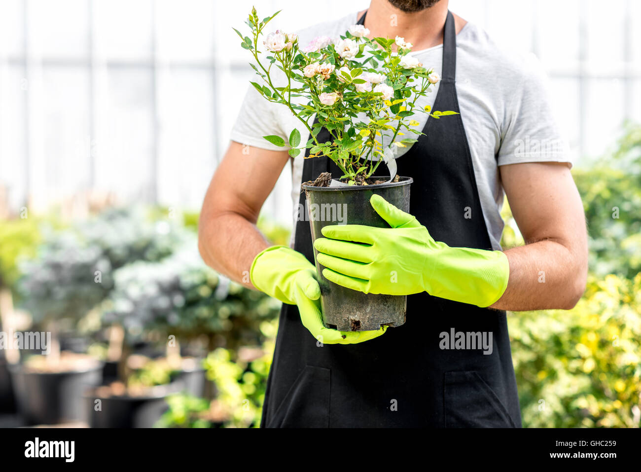 Gardener with a flowerpot - Stock Image