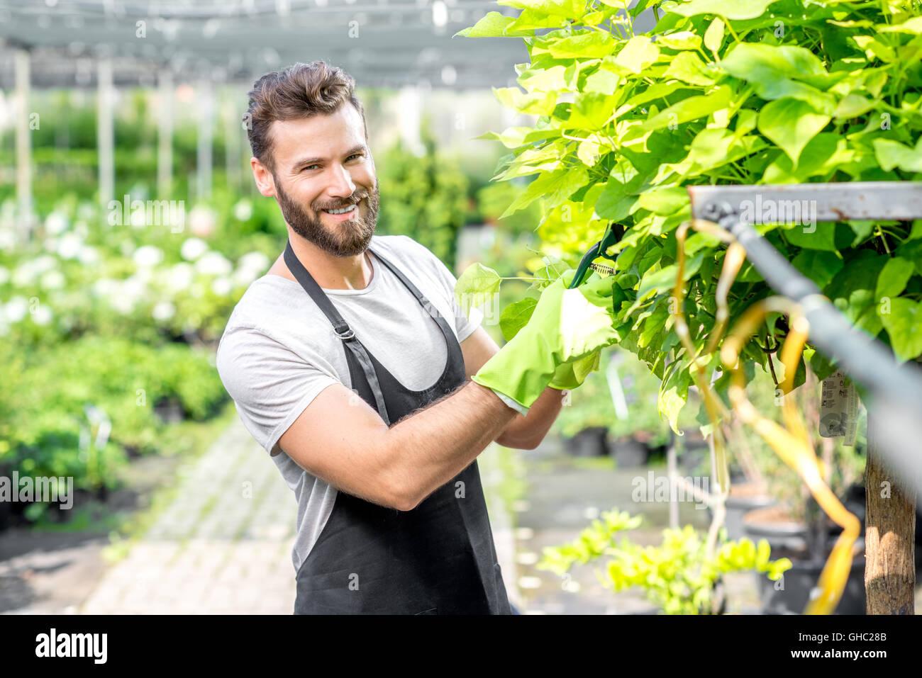Gardener pruning a tree - Stock Image