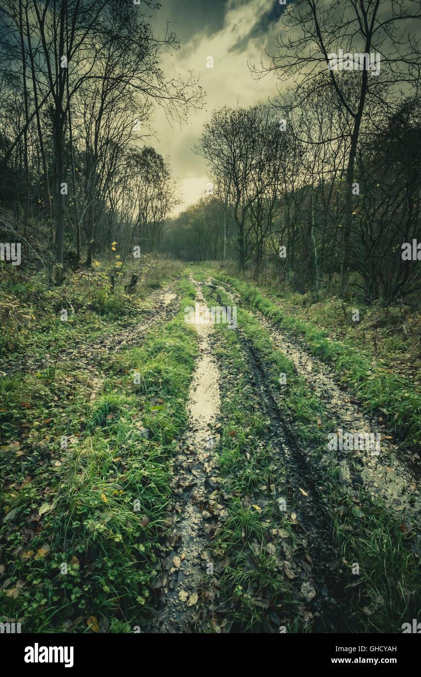 Waterlogged lane through dark woods Stock Photo