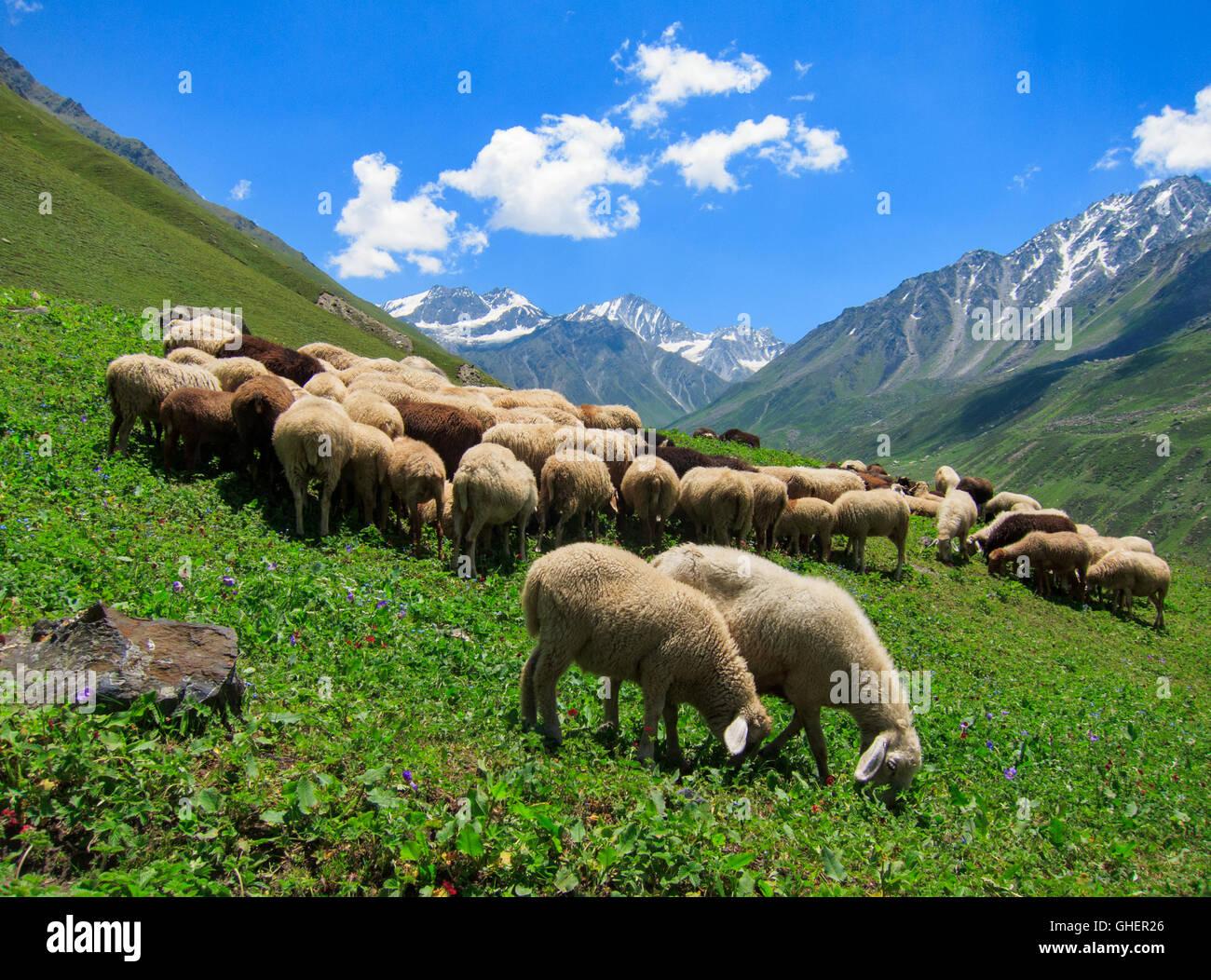 Bhaba Pass Trek (Himachal Pradesh, India) - Stock Image
