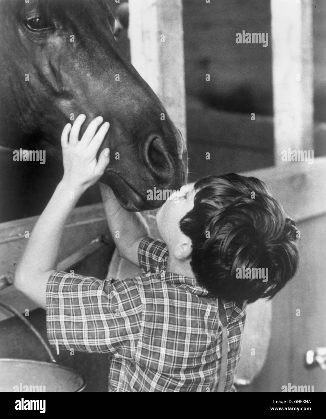 THE BLACK STALLION USA 1979 Carroll Ballard Little Alec Ramsay (KELLY RENO) kissed his beloved horse, The Black. - Stock Image