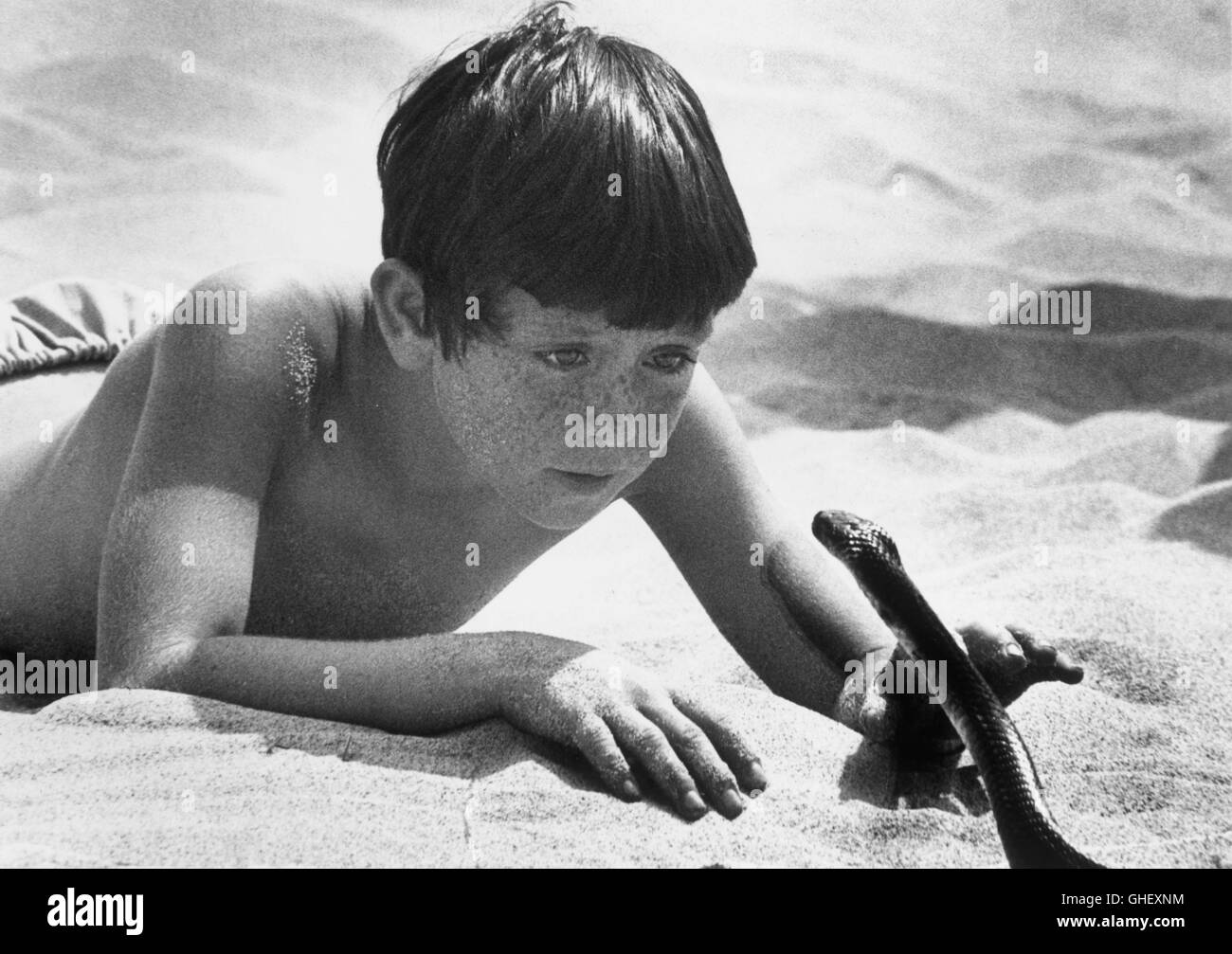 THE BLACK STALLION USA 1979 Carroll Ballard Hypnotized and terrified by a deadly snake, Alec Ramsey (KELLY RENO) - Stock Image