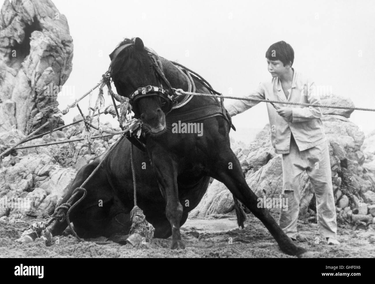THE BLACK STALLION USA 1979 Carroll Ballard Alec Ramsey (KELLY RENO) whose life was saved by a horse in a shipwreck, Stock Photo