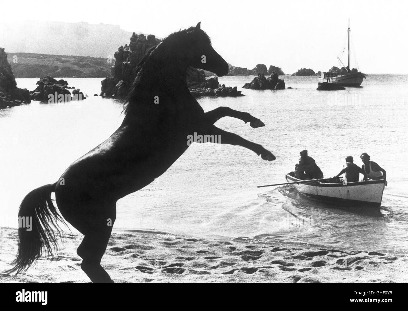 THE BLACK STALLION USA 1979 Carroll Ballard Rearing angrily on the beach, The Black expresses his dismay at having - Stock Image