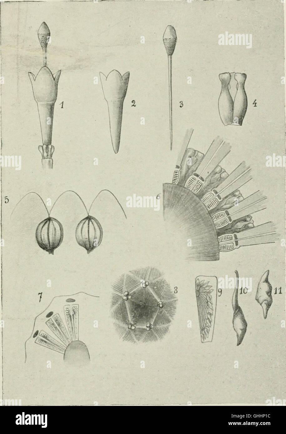 Bulletin du Musum national d'histoire naturelle ((1895-1970)) Stock Photo