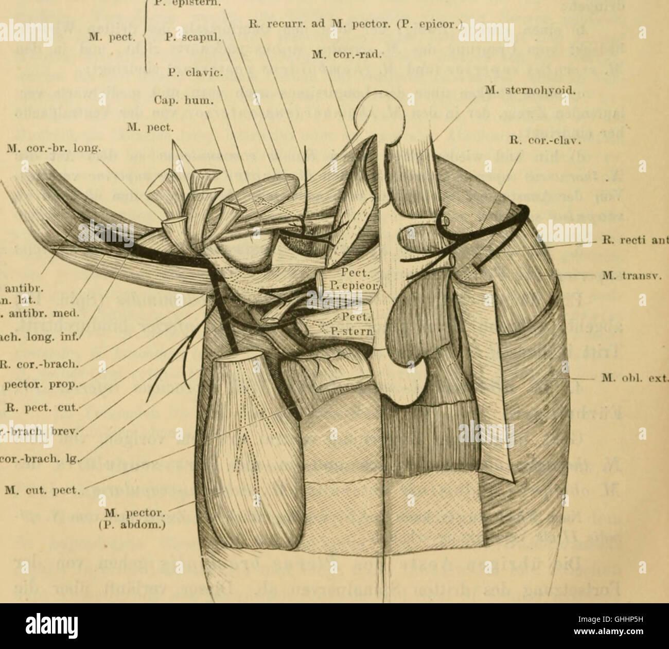 Atemberaubend äußeree Anatomie Des Frosches Und Seine Funktionen ...