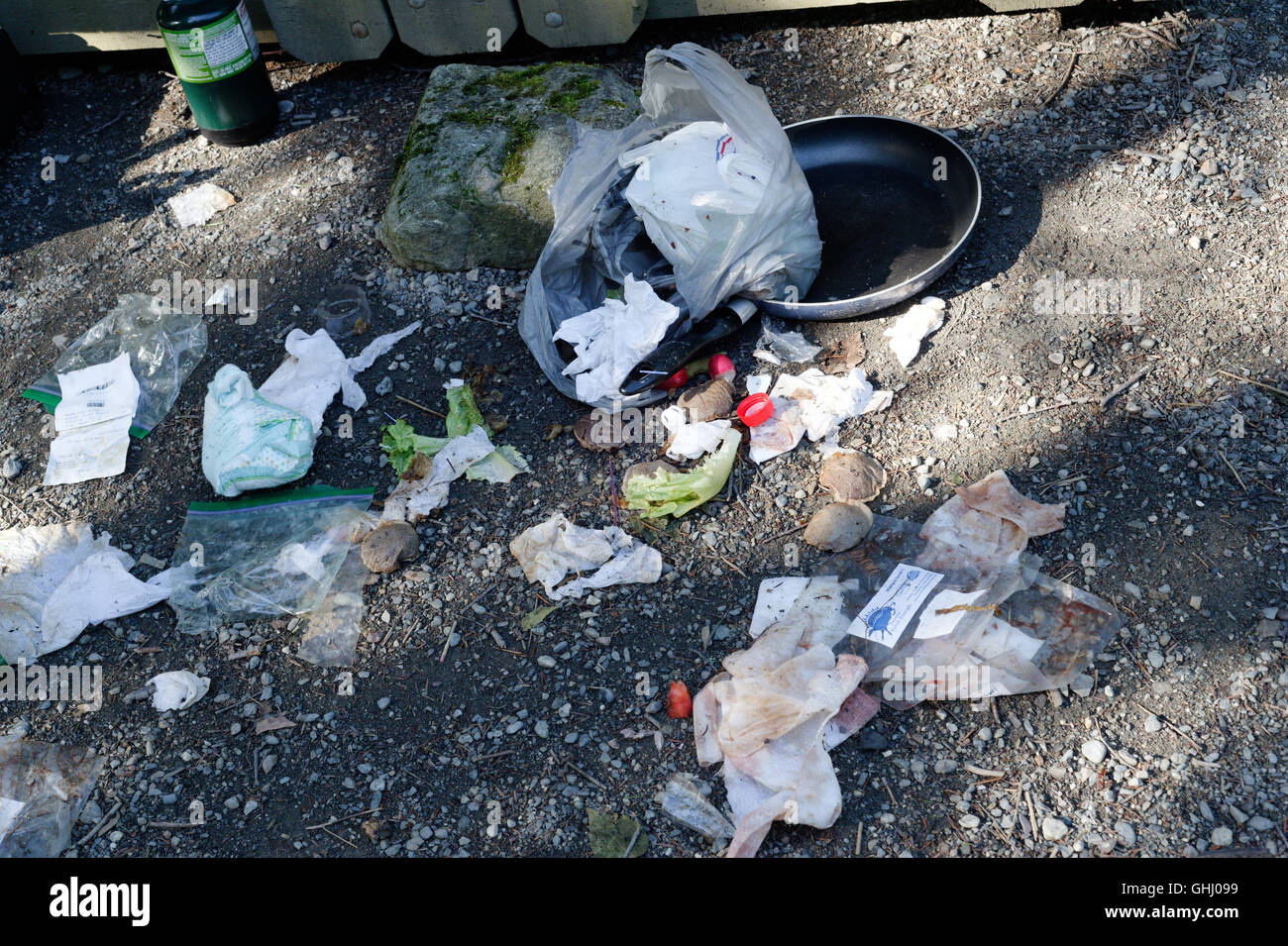 A rubbish bag torn open by birds on a campsite - Stock Image