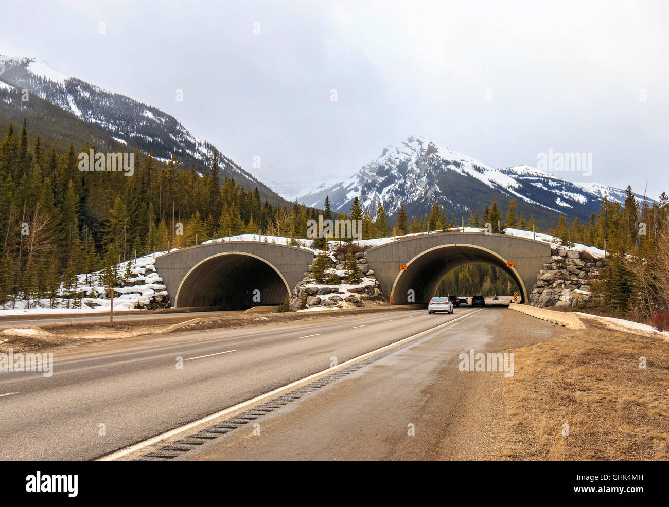 One of many animal overpasses on the Trans Canada Hwy. They've been a great success. Cougar, elk, moose bears, - Stock Image