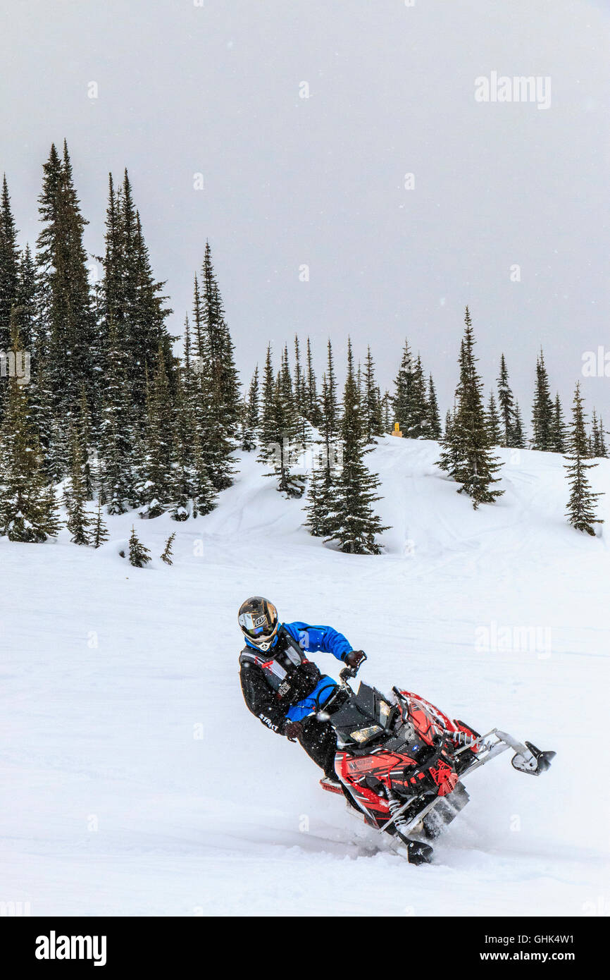 Having fun while snowmobiling in the Purcell Mountains near Golden, BC. Here the guide tips his snowmobile for a - Stock Image