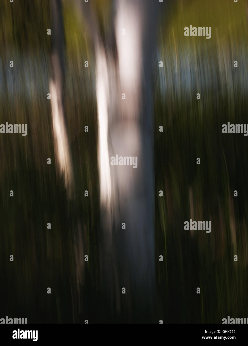 Artistic motion blur of trees and foliage. - Stock Image