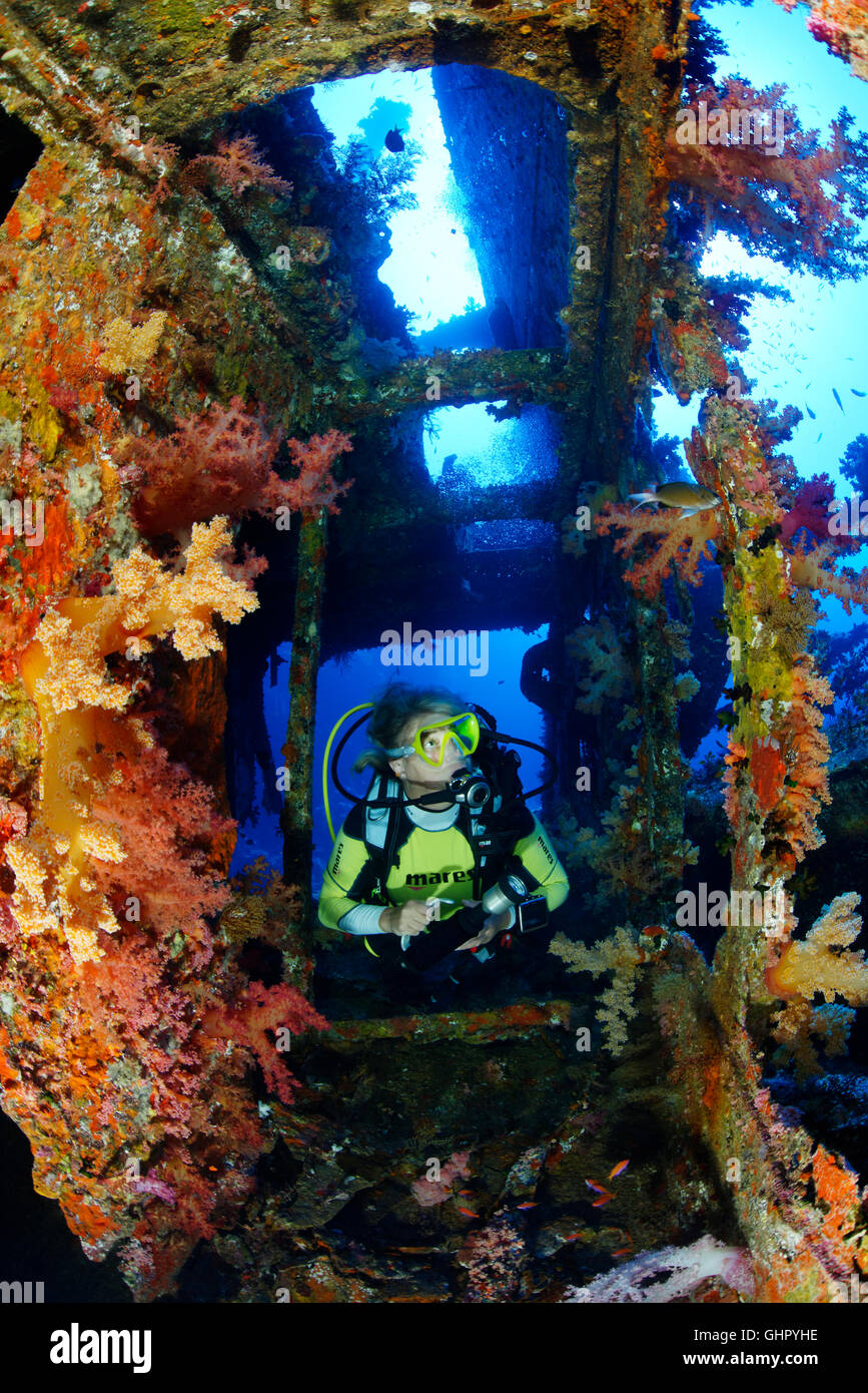 Shipwreck Aida and scuba diver inside the Wreck and soft coral, Brother Islands, Big Brother, Red Sea, Egypt Stock Photo
