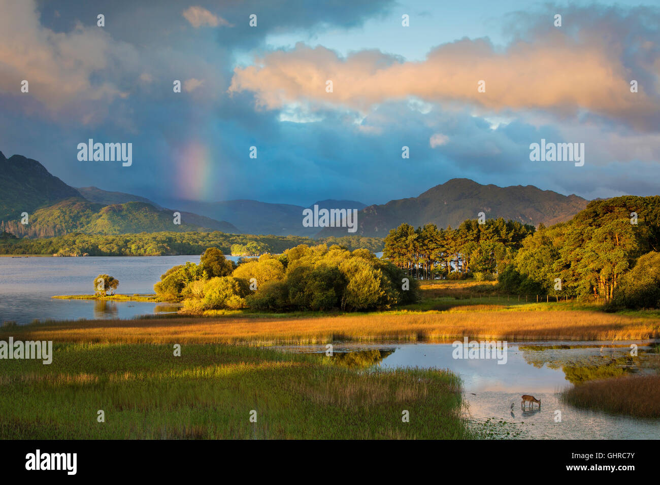 Dawn view over Lough Lean, Killarney National Park, County Kerry, Republic of Ireland - Stock Image