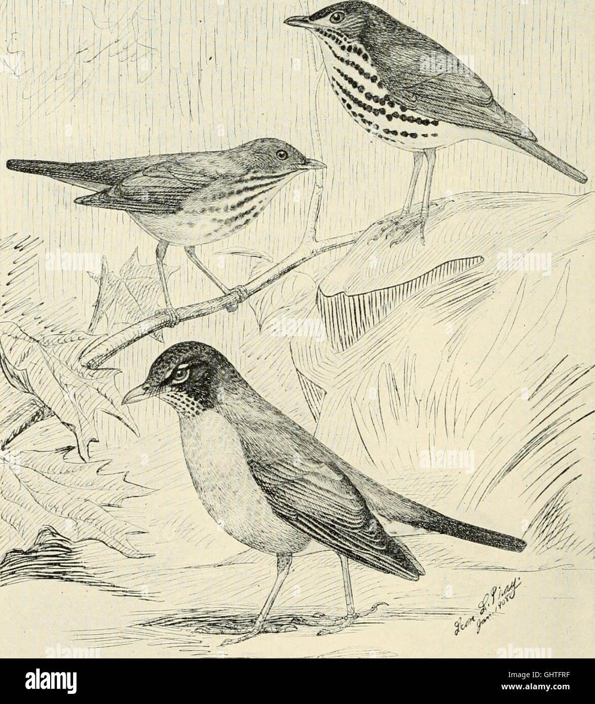 The birds of Illinois and Wisconsin (1909) Stock Photo