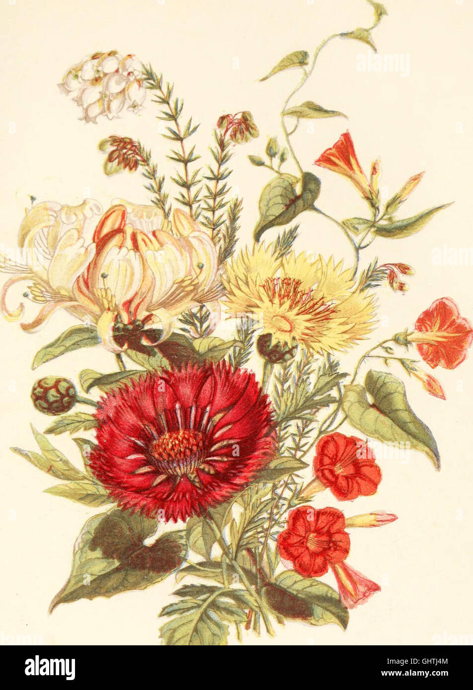 The language of flowers, or, Floral emblems of thoughts, feelings, and sentiments (1869) Stock Photo